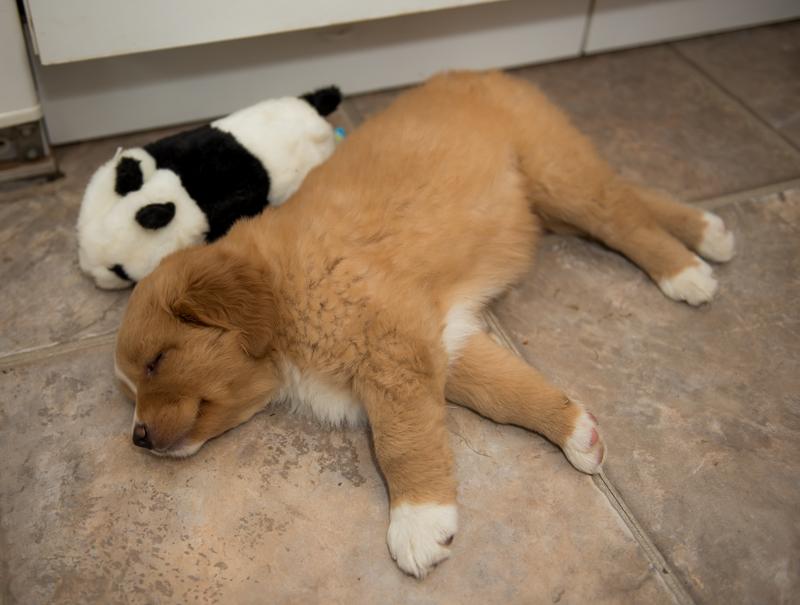 tollare-valpar-sover-10