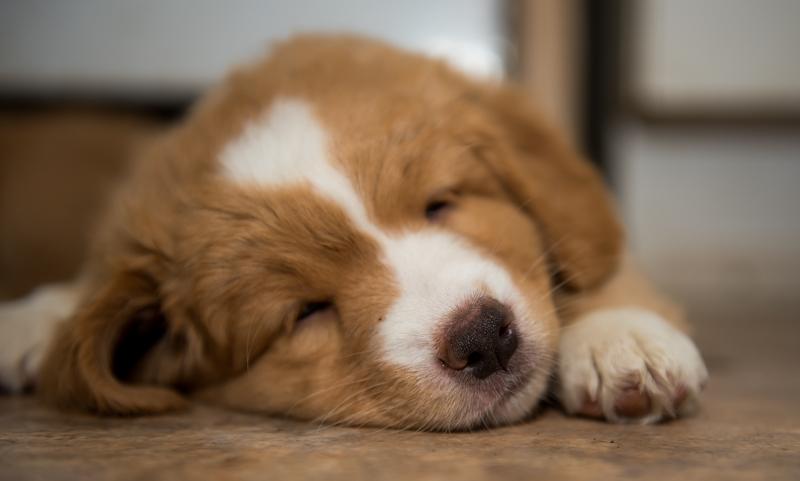 tollare-valpar-sover-2