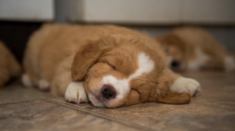 tollare-valpar-sover-4