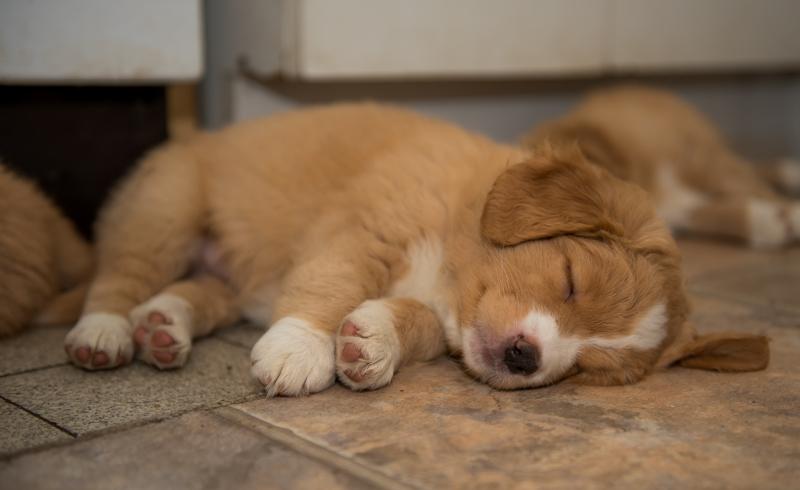tollare-valpar-sover-5