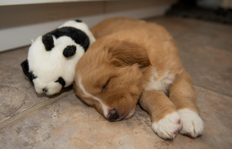 tollare-valpar-sover-6