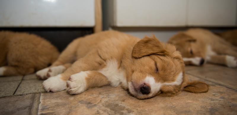 tollare-valpar-sover-7