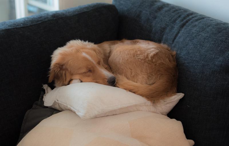 tossen sover gott efter äventyr