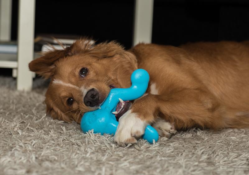 tossen oförstörbar leksak blåis