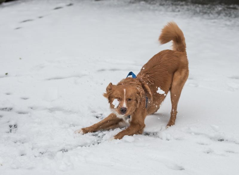 Tollare ser snö första gången