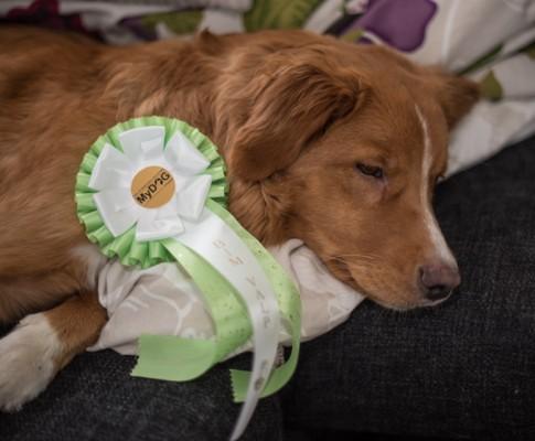 Mydog 2 2016