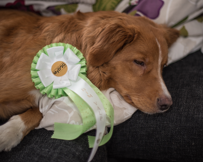 tollare mydog 2016 tollare BIM