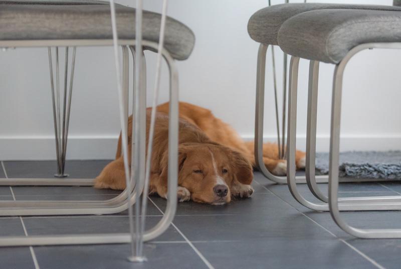 tollare sover under bordet