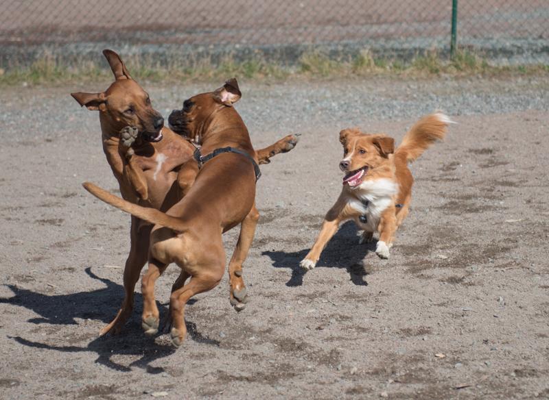 stora hundar slottsskogen