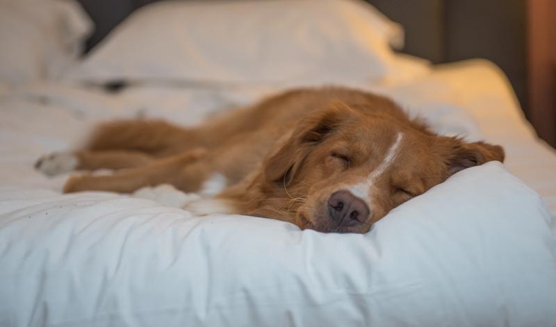 hundutställning trött vinnare