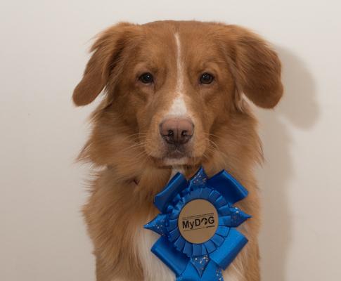 Mydog 1 2017