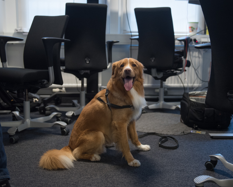 kontorshund-1