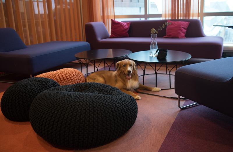 kontorshund-2