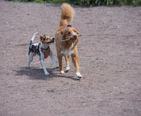 Hundvakt
