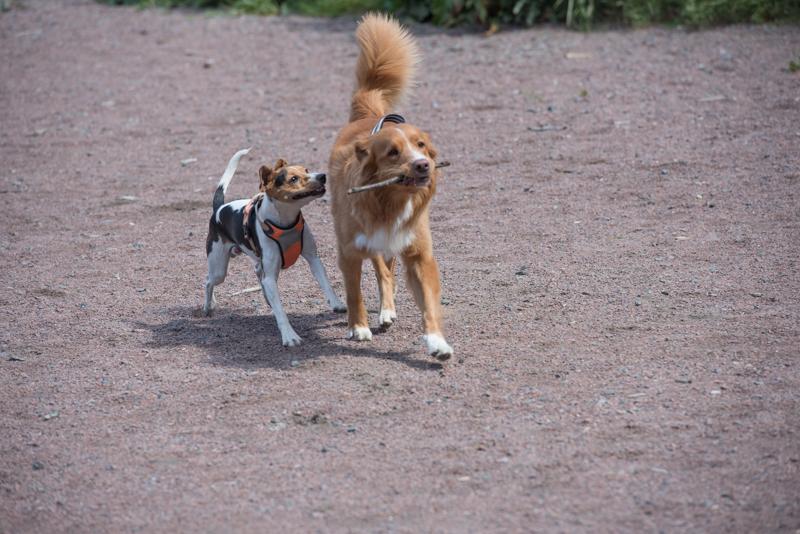 hundvakt-9