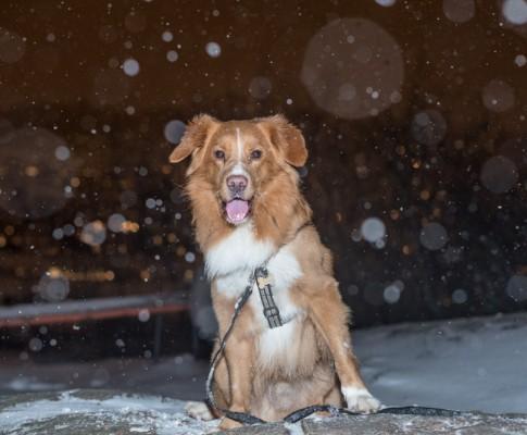 Promenad i snön